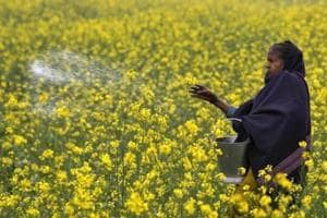 Govt gives nod for extension of urea subsidy till 2020