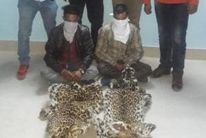 Two persons arrested with two leopard skins in Kalsi, Dehradun.