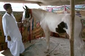 Horse for which Salman Khan offered ₹2 crore, a star attraction at...