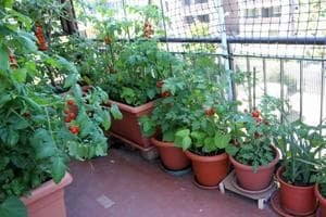 Grow your own veggies: Here's how to make a balcony garden