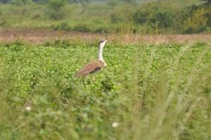Encroachments on Sorsan water bodies worries wildlife lovers