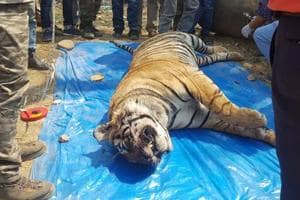 Two tigers die in as many days in Rajasthan's Ranthambore, Sariska