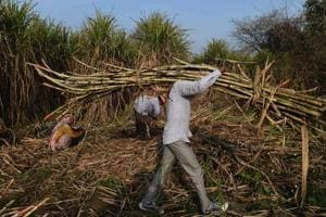 Government scraps export duty on sugar