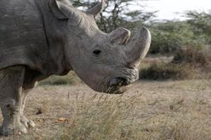 Photos: Sudan, the world's last male northern white rhino dies