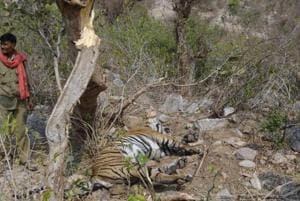 NTCA asks Rajasthan to remove encroachments in Sariska
