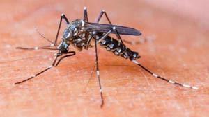 Maha records 12% of India's malaria, dengue deaths, gets less than 2%...