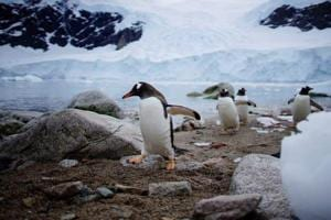 Photos | A journey to Antarctica: seals, penguins and glacial beauty