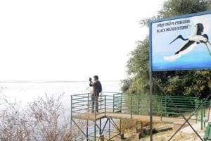 Notified in 1990, the Okhla Bird Sanctuary is now one of the 466 important birding areas in India. It is home to 30 species of migratory birds that arrive here from mid-October to mid-November every year.