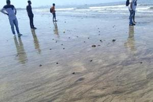 Did Olive Ridleys hatch at Mumbai beach? Turtle tale puzzles...