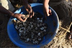 The turtle egg shells were found on Friday morning at Versova beach.
