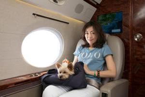 Living the good life: Pet owners pamper pooches with luxury holidays