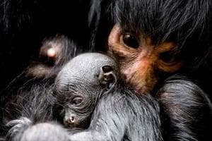 Photos of the week: From a newborn spider monkey in Amsterdam to...