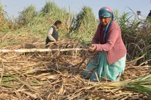 Uttarakhand produced 2.72 lakh metric tonne sugarcane in 2017-18 and has pending arrears of Rs 530 crore. States having greater production have lower arrears.
