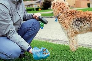 An on-the-spot fine of ₹500 will be issued to those who do not clean up after their pets.