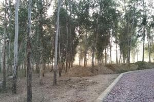 The Noida authority has started making walkways in the park that is being developed in Sector 91. Nearly 3,500 trees have to be cut to build the park.