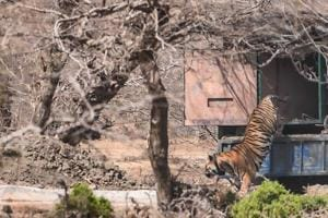 Hi-tech security for safety of tigers at Mukundra Reserve in Rajasthan...