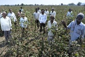 Policies such as farm loan waivers squeeze state capacity to increase investment in agriculture.