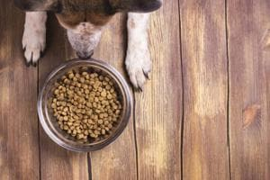 Pet food goes cruelty free. Fake meat may soon be a part of your dog's...