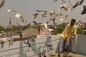 Photos: Flying pigeons for sport in Lucknow's Old city