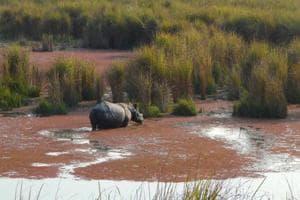Dudhwa to begin second rhino rehabilitation programme tomorrow