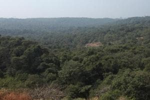 9 Mumbaiites rescued after losing their way in SGNP forest