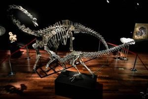 Dinosaur skeletons become trendy interior design objects. Two on sale...