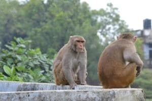 The Chidiapur centre in Haridwar district has sterilised more than 1,300 monkeys since October 2016.