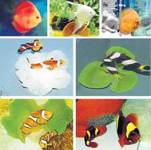 Mumbai's own marine ornamental fish breeding centre is the second in the country after Chennai.