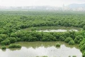 According to non-profit Mangrove Society of India (MSI), intertidal regions are in high demand as they can be potential hotspots for construction and infrastructure development.