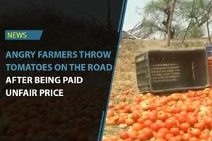 Farmers in Sehore have dumped their tomato produce on the road. They...