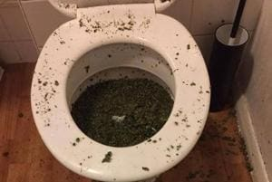 Pot in the pot: Cops on why flushing marijuana down the toilet may not...