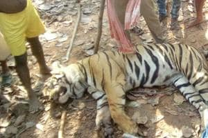 The carcass of the tiger was found on Friday inside a forest near Lalgarh in West Midnapore district.