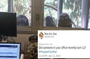 These owls are making people really uncomfortable  (Michael lens/ twitter)