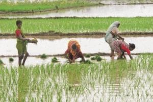 The monsoon delivers about 70% of India's annual rainfall.