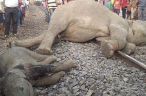 Four elephants killed as speeding train rams into herd  in Odisha