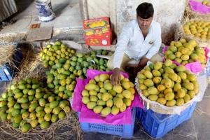 Now, only mangoes from Konkan to be called Hapus
