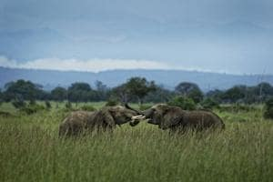 Photos: Battle to save African elephants is gaining ground in Tanzania