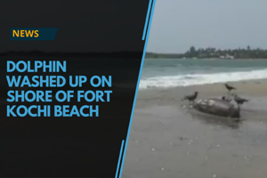 A carcass of a dolphin was found washed up at the shore of Fort Kochi...