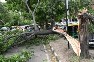 Fatal winds: Gust leaves 1 dead, 5 hurt in Chandigarh tricity