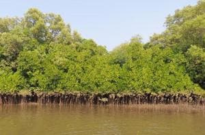 Konkan commissioner orders enquiry into three mangrove destruction...