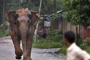 Elephant tramples 70-year-old woman to death in Odisha's Dhenkanal...