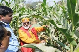 UP agri deparment nod to new, better variety of maize for farmers