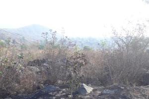 Navi Mumbai's Kharghar loses 100 trees, locals allege sabotage