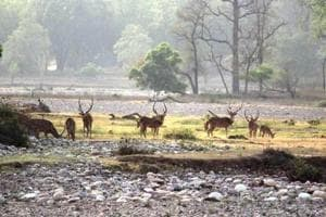 Rivers and streams dry up during summer months in Haldwani range posing problems for the animals.