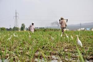 A PIL in HChad alleged that four farmers had committed suicide in Uttarakhand last year over various reasons.