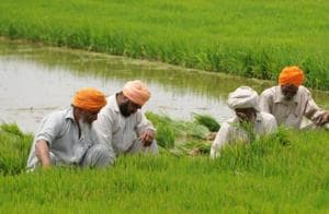 """""""We apprehend that if sowing is delayed as mandated by the government, there will be problem at the ripening stage,"""" Nek Singh, a paddy grower, said."""