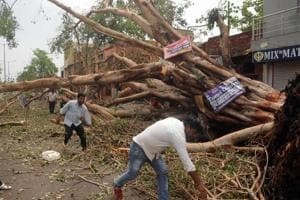 People clearing a road blocked by a fallen tree at Kheria Mod near Agra on April 3.