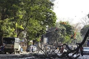 Four tree fall deaths were recorded in 2017 in Mumbai.