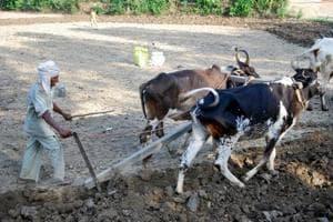 A survivor of man animal conflict works at his fields in a village near Corbett Tiger Reserve in Ramanagar.