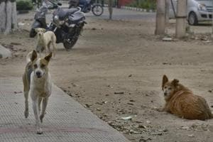 At least six children have died in dog attacks in Uttar Pradesh's Sitapur district .